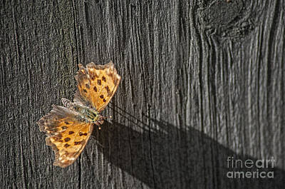 Photograph - Moth Getting Warmth From Sun by Dan Friend