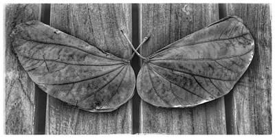 Wall Art - Photograph - Moth Leaf by Mary McGrath