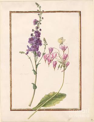 Flower Painting - Moth Mullein Verbascum Blattaria Shooting Star  by MotionAge Designs