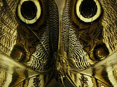 Photograph - Moth Of Magic Wings by Nancy Griswold