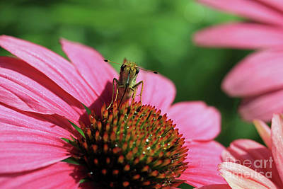 Photograph - Moth On A Flower by Mary Haber
