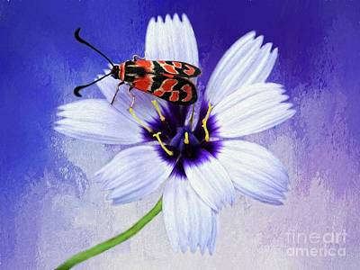 Digital Art - Moth On Flower by Suzanne Handel