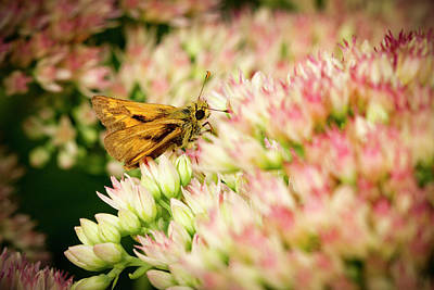 Photograph - Moth On Joy by Jean Noren