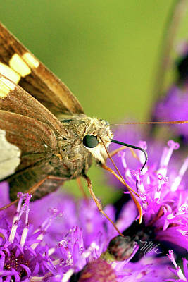 Print featuring the photograph Moth On Purple Flower by Meta Gatschenberger