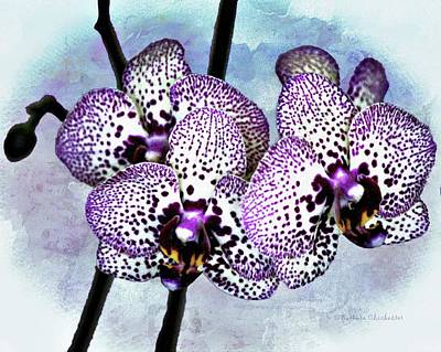 Digital Art - Moth Orchid by Barbara Chichester