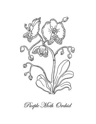 Florals Drawings - Moth Orchid Botanical Drawing Black And White by Irina Sztukowski