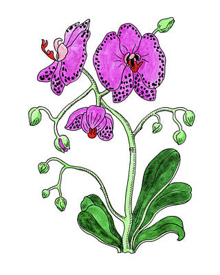 Painting - Moth Orchid Botanical Watercolor  by Irina Sztukowski