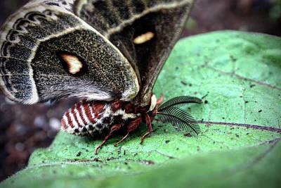 Digital Art - Moth by Patrick Groleau