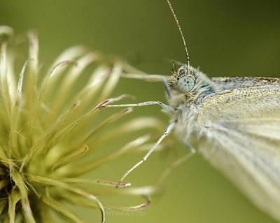 Photograph - Moth.... by Paul Vitko