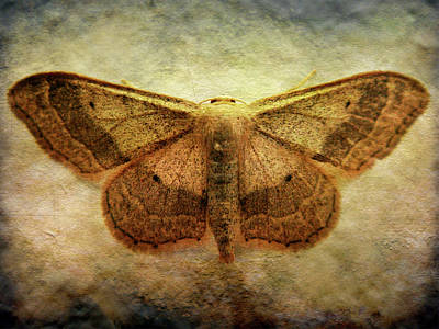 Moth Art Print by Roberto Alamino