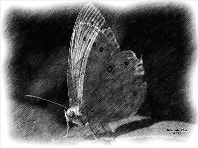 Digital Art - Moth Sketch by Artful Oasis