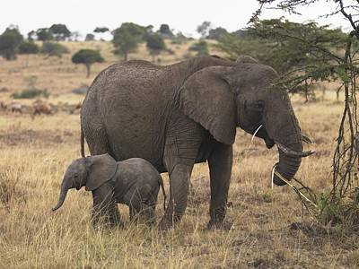Photograph - Mother And Baby Elephant by Keith Levit