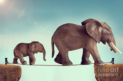 Predicament Photograph - Mother And Baby Elephant On A Tightrope  by Lee Avison