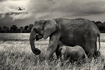 Photograph - Mother And Baby Elephants by Charuhas Images