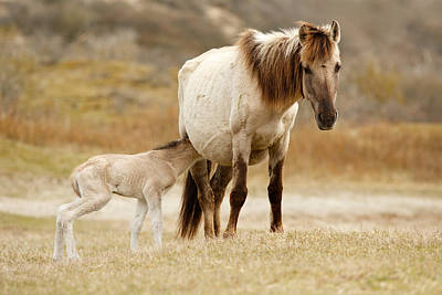 Mother And Baby Horse Art Print