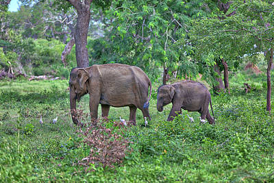 Photograph - mother and baby, Indian Elephants, are walking through the jungle by Regina Koch