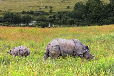 Great Photograph - Mother And Baby Rhinos by Tom Mc Nemar