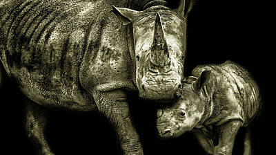 Rhino Photograph - Mother And Child by Martin Newman