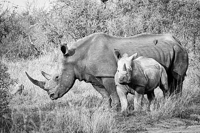 Photograph - Rhinoceros Mother And Child  by Alan Bland