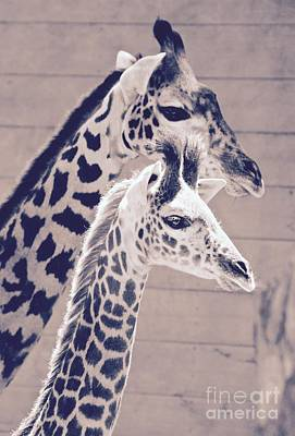 Photograph - Tall And Proud by Suzanne Oesterling