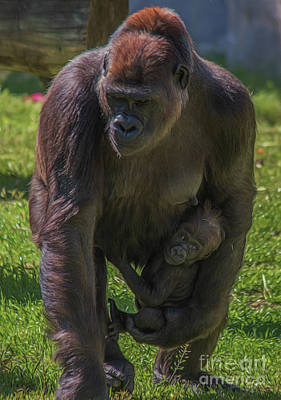 Photograph - Mother And Child - Gorillas by Teresa Wilson