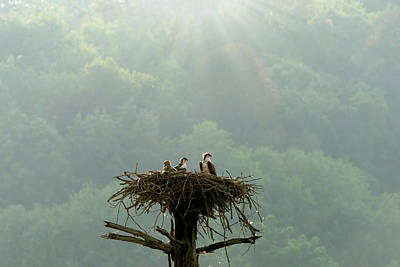 Photograph - Mother And Children In The Nest by Dan Friend