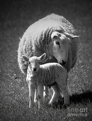 Photograph - Mother And Daughter by Clare Bevan