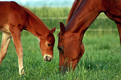 Mother And Foal 3377 H_2 Art Print