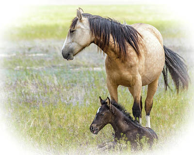 Photograph - Mare And Foal by Joe Hudspeth