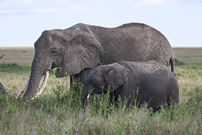Loxodanta Photograph - Mother And Young Elephants by Sally Weigand