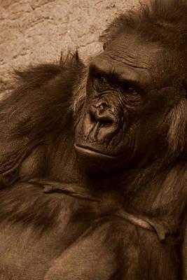 Gorilla Wall Art - Photograph - Mother by Brad Scott