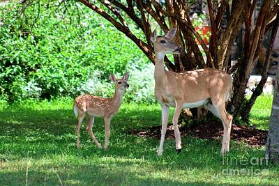 Photograph - Mother Deer And Fawn by Ella Kaye Dickey