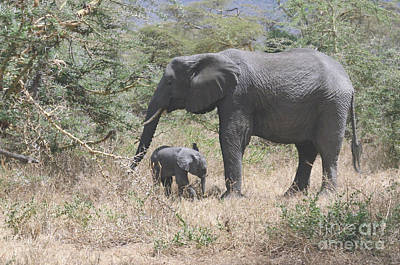 Photograph - Mother Elephant With Baby Foraging by Tom Wurl