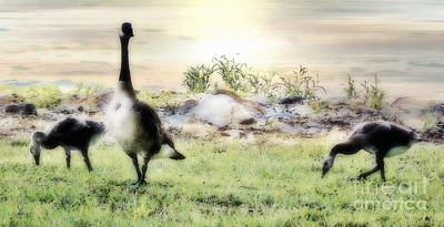 Mother Goose Digital Art - Mother Goose by Anita Faye