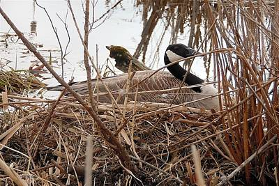 Mother Goose Digital Art - Mother Goose Nesting by Lj White