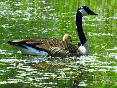 Universal Mother Photograph - Mother Goose by Robyn King