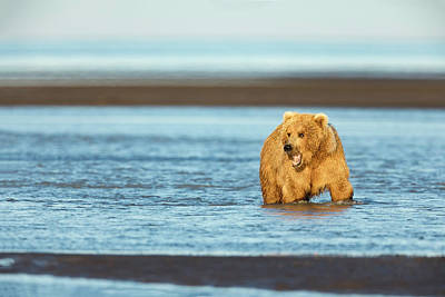 Photograph - Mother Grizzly Fishing by Mark Harrington