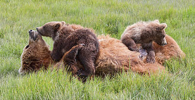 Mother Grizzly Suckling Twin Cubs Art Print