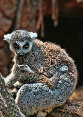 Photograph - Mother Lemur And Child by Allen Beatty