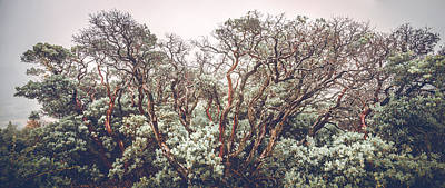 Photograph - Mother Manzanita by Alexander Kunz