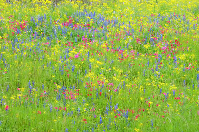 Photograph - Mother Nature Paints With Technicolor. by Usha Peddamatham