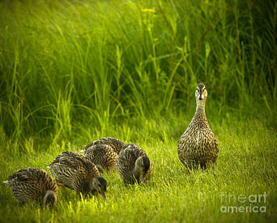Photograph - Mother Of Five by Aimelle