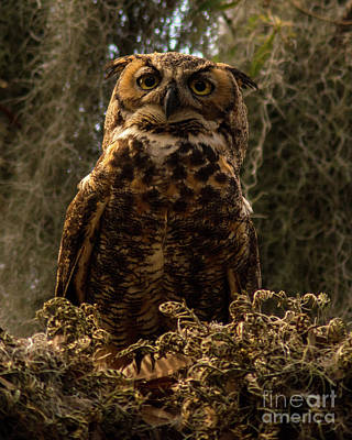 Photograph - Mother Owl Posing by Jane Axman