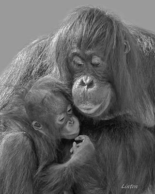 Photograph - Motherhood 10 by Larry Linton