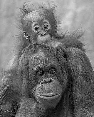 Photograph - Motherhood 14 by Larry Linton