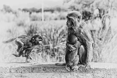 Photograph - Motherly Nurturing Love by Rene Triay Photography