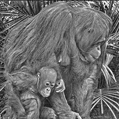 Orangutan Digital Art - Motherly Love by Larry Linton