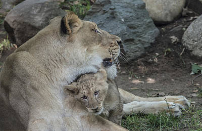 Photograph - Motherly Snuggle by William Bitman
