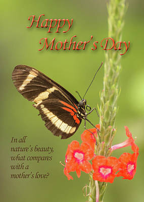 Photograph - Mother's Day-butterfly by James Capo