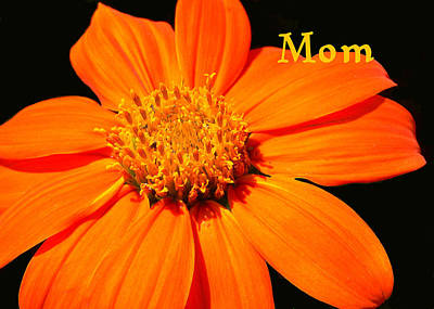 Photograph - Mother's Day Card by Rosalie Scanlon
